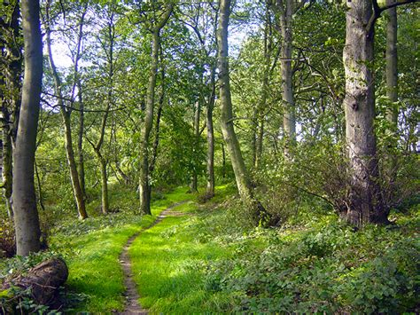 Woodlands Sheds Leeds by Walks In The Leeds And Harrogate Area Horsforth River