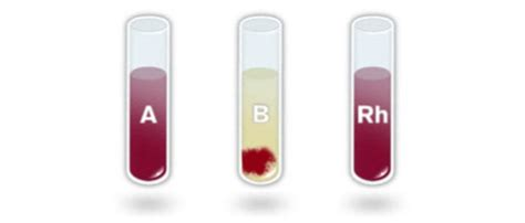 Gamis Rh the blood typing tutorial 2 how do you get the
