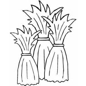 Corn Stalk Template by Three Cornstalks Coloring Page