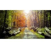 Spring Forest Wood Path Sunlight Photo Manipulation