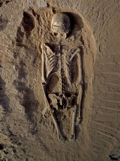 the remains of the remains of prehistoric massacre prove human beings have always been bloodthirsty warmongers