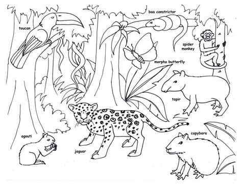 forest animals coloring pages for adults tropical rainforest coloring pages coloring home