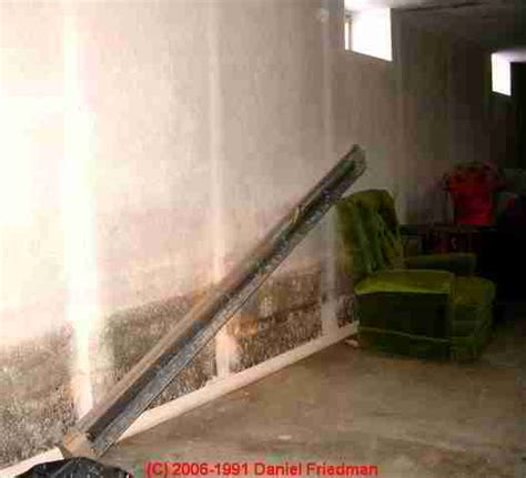 basement air quality test mold allergen and aerobiology associations information