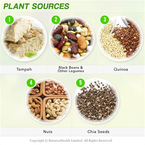 sources of protein quality protein our top five animal plant sources