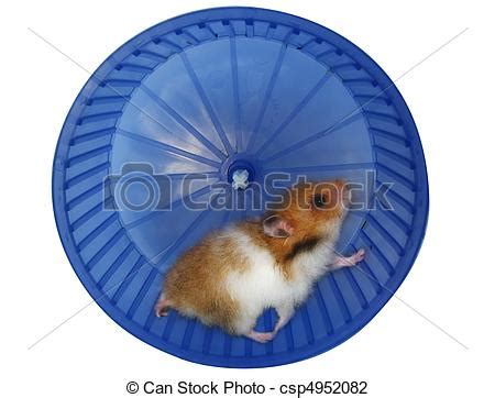 Wheels Exercise X8 Kincir Hamster Mencit stock photo of hamster in a wheel white background csp4952082 search stock photography