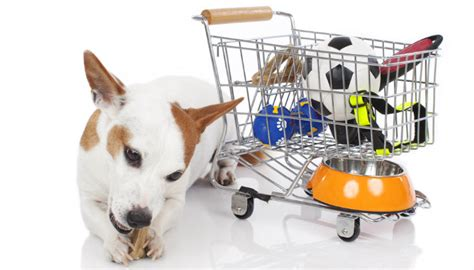 places to pet puppies pets on a budget what s the best place to buy cheap supplies