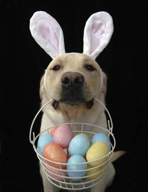 puppy eggs doggie easter egg hunt oklahoma animal alliance