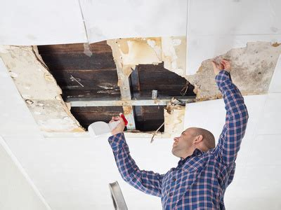 mold what you need to about your home rj home