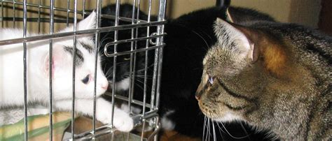 nieuwe kat in huis home de kattensite