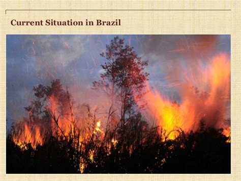 Biomars Lung deforestation causes effects and solutions