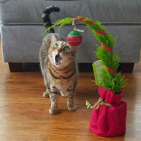 i have a cat need cat proof xmas tree genius hacks to cat proof your tree meowingtons