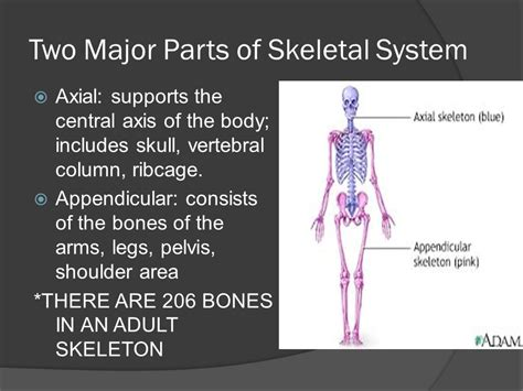 what are the two main sections of an html document the skeletal system ppt video online download