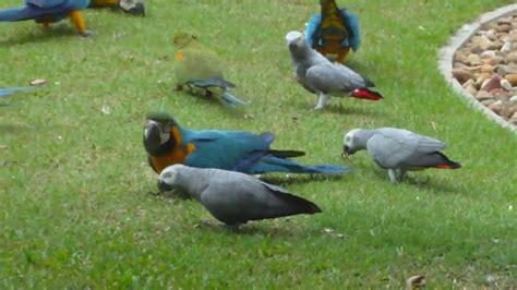 bird farm chachergsao central thailand 01 mp4 youtube