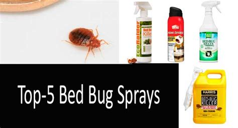 the best bed bug spray what is the best bed bug killer 28 images top 5 bed bug sprays blood sucking
