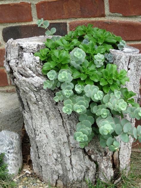 Pflanzen F En Vorgarten