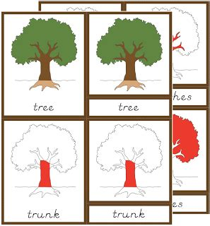 Template For Montessori Nomenclature Cards by Early Childhood Botany Nomenclature Cards The Helpful