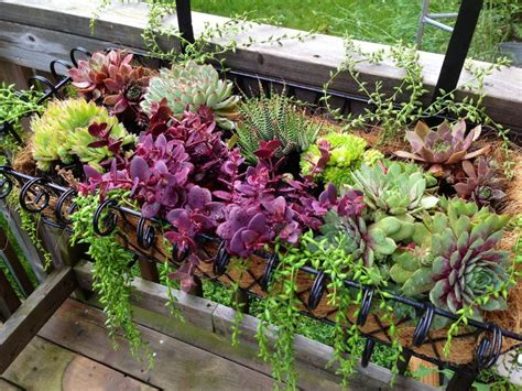 succulent window box 180 best images about succulent window boxes containers