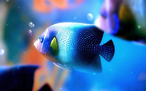 most colorful wallpaper ever most beautiful colorful fish hd pictures exotic collection