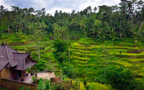 airbnb bali ubud top 10 airbnb accommodations in ubud bali trip101