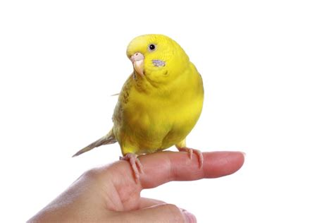 tips of selecting and caring for pet birds wishforpets