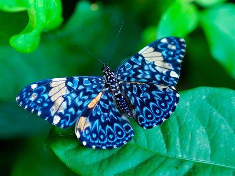 imagenes sobre mariposas image gallery mariposas