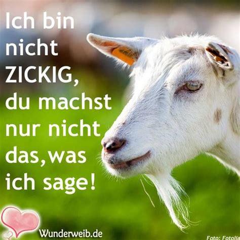bettdecke meme 570 besten lustige tiere bilder auf tiere