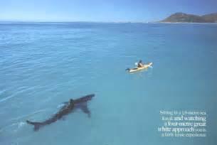 Shark attack 3 megalodon john barrowman jenny mcshane ryan