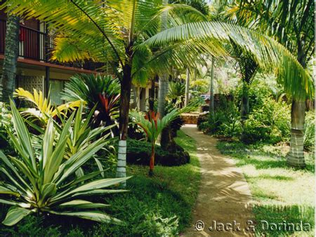 how to create a tropical backyard kauai vacation rental condos by owner garden and pool pictures