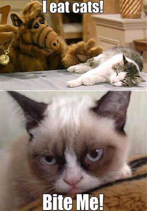 Alf Meme - 17 best images about grumpy cat on pinterest