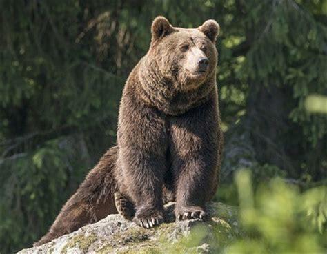 imagenes animales que viven en el bosque animales que viven en el bosque animales que
