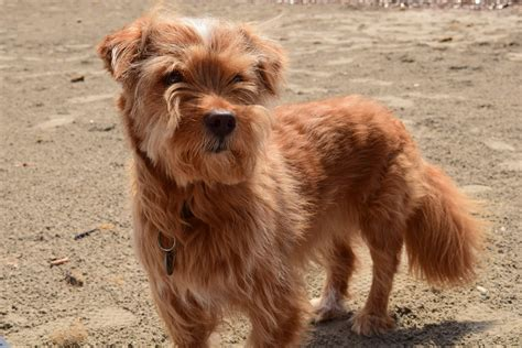 picture canine cute brown dog pet animal sunshine