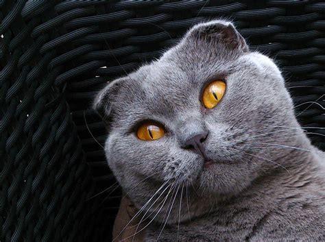 Gratis billeder : grå, fauna, tæt på, næse, whiskers