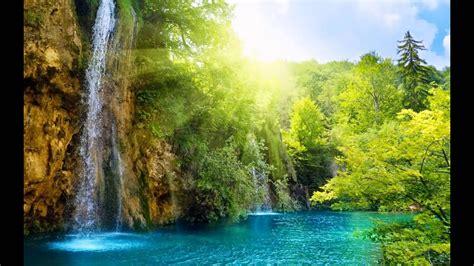 pemandangan hutan  indah youtube
