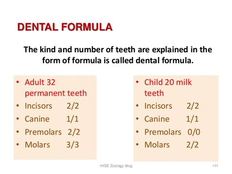 dental formula canine dental formula images