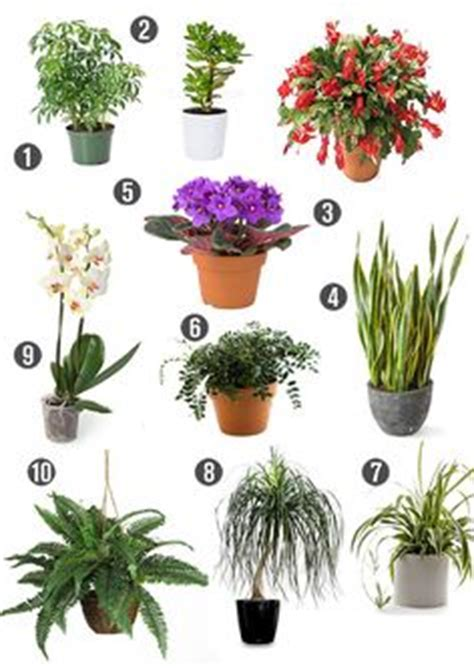 house plants safe for cats non toxic house plants children dogs cats on pinterest