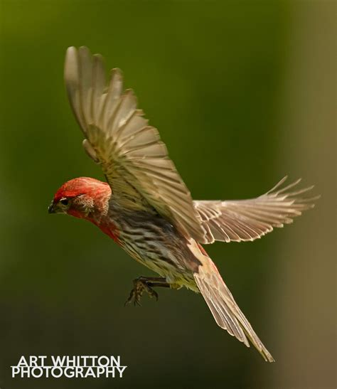 backyard bird photography backyard bird photography 28 images learn how to do bird photography in your own