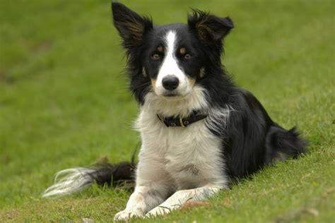 lade berger dressage chien comment dresser chien facilement