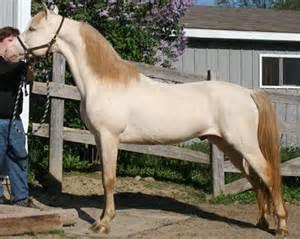 dun color atomic stables white quot sea horses quot