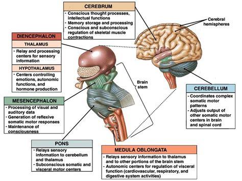 Poster Sistem Endokrin anatomi fisiologi untuk mahasiswa kedokteran dan keperawatan