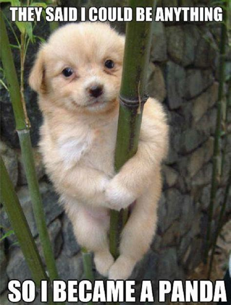 Puppie Memes - cute puppy meme tumblr image memes at relatably com