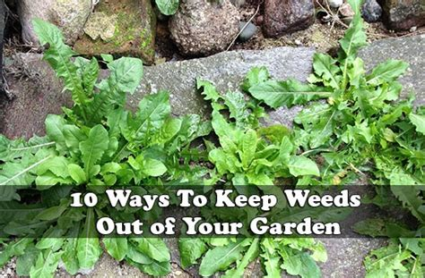 how to keep weeds out of flower beds how to chicken proof your garden modern farmer easy