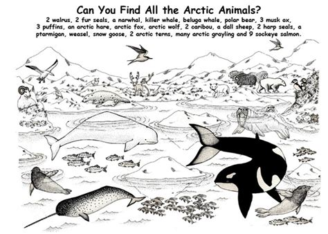 Printable Coloring Book Arctic Animals Coloring Pages Ice Earth Arctic Coloring Page