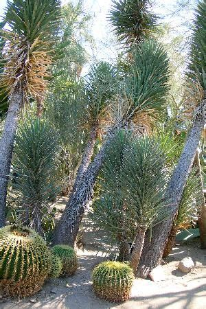 Palm Desert Botanical Gardens 20 Best Images About Things To Do In Palm Springs Ca On Foxs News Bobs And Aerial