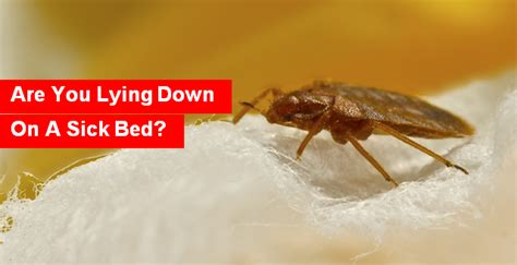can bed bugs make you sick can bed bug bites make you sick 28 images 14 best