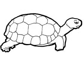 turtles outline free printable turtle coloring pages for