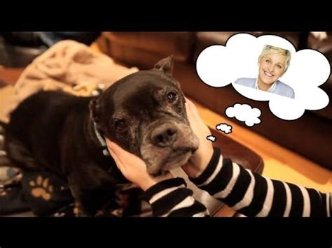 life in the dog house help mr moses bring life in the dog house to ellen youtube