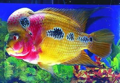 Han Decor 2 In 1 Alat Pembersih Sisik Ikan Pisau fauzi jenis jenis ikan hias cantik di dunia