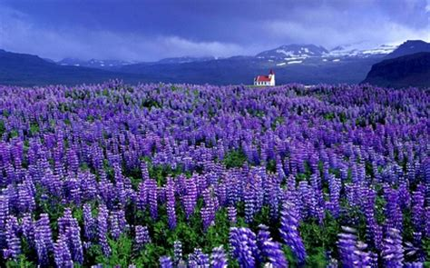 violet ocean fields nature background wallpapers