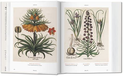 leer libro basilius beslers florilegium the book of plants bibliotheca universalis ahora basilius beslers florilegium the book of plants bibliotheca universalis libro de texto para leer