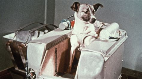 animal  space  history